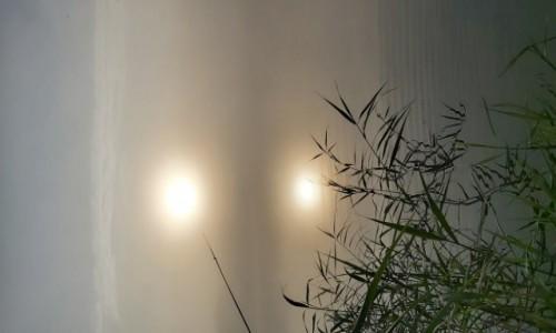 Zdjecie POLSKA / lubuskie / jezioro  / rankiem nad jeziorem