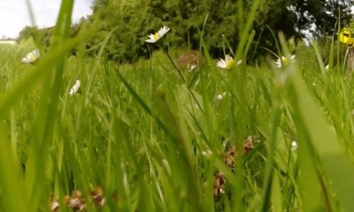 Zdjecie POLSKA / Szwajcaria Kaszubska / Chmielno / Co w trawie piszczy...