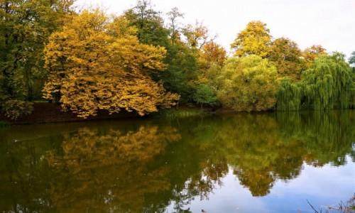 Zdjecie POLSKA / Pomorskie / Gdańsk, Park Oruński / W lustrze wody