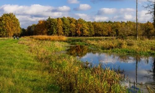 Zdjecie POLSKA / Mazowsze / kanał Łąsica w Kampinoskim Parku Narodowym / Mazowiecki klimat