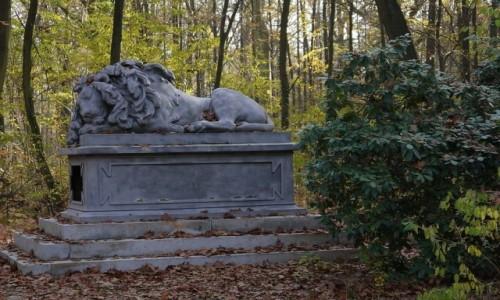 Zdjecie POLSKA / opolskie / Pokój / Śpiący lew