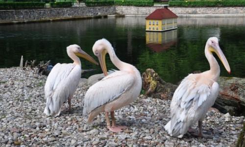 POLSKA / pomorskie / Wejherowo / Ptaki w parku