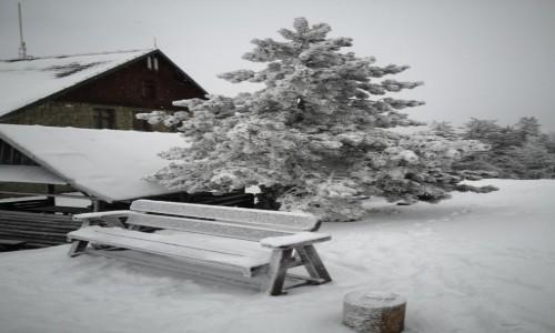 Zdjecie POLSKA / Beskid Śląski / Klimczok / śniegiem malowane