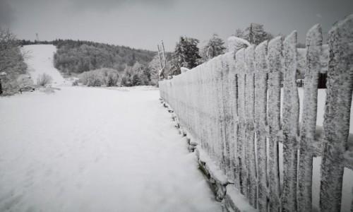 Zdjecie POLSKA / Beskid Śląski / Klimczok / W poszukiwaniu zimy..