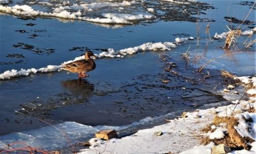 Zdjecie POLSKA / Wielkopolska / nad Wartą / pospacerować, czy popływać może?:)