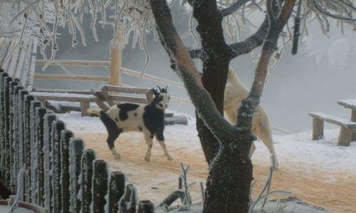 Zdjecie POLSKA / Góry Sowie / Góry Sowie / Koziołki