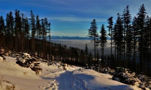 Zdjecie POLSKA / Beskid żywiecki / hala krupowa / piękna zima na szlaku