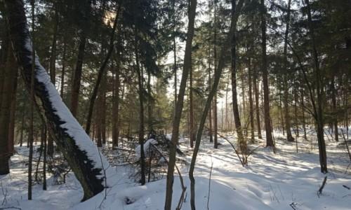 POLSKA / Podlasie / Białystok / Spacer o poranku