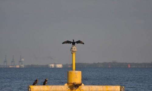 Zdjęcie POLSKA / Pomorze / Gdynia / Gdynia okolice portu