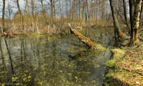 Zdjęcie POLSKA / Dolina Noteci / Nadnoteckie łęgi / Torfowiska w nadnoteckich łęgach
