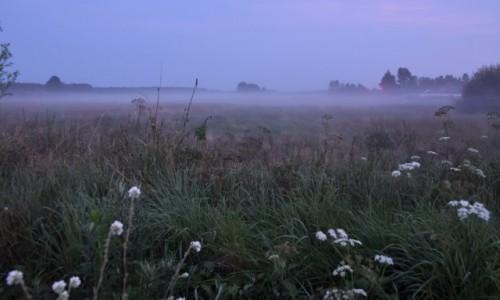 POLSKA / Podlasie / Podlasie / Wieczorne mgły na Podlasiu