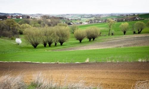 Zdjęcie POLSKA / Ponidzie / Ponidzie / Wiosna na Ponidziu
