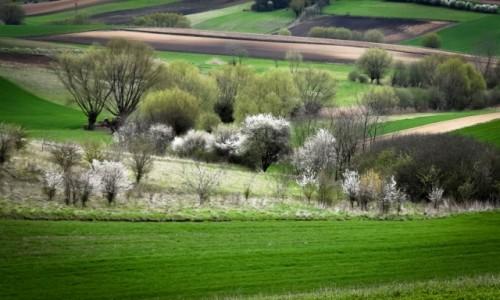 POLSKA / Ponidzie  / Ponidzie / Wiosna na Ponidziu