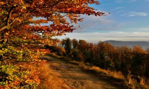 POLSKA / Beskidy / Klimczok / jesień w pięknych kolorach