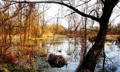 Zdjęcie POLSKA / Mazowsze / ok.Skierniewic / rzeka 5