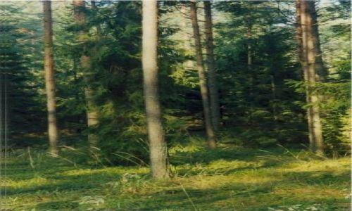 Zdjecie POLSKA / Podlasie / Puszcza Knyszyńska / Drzewo