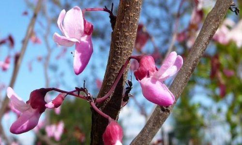 Zdjecie POLSKA / brak / brak / mrówka na wiosennym spacerze