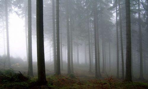 Zdjecie POLSKA / beskidy / trzy kopce / góry-moja miłoś