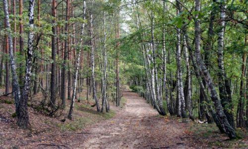 Zdjecie POLSKA / puszcza kampinoska / Sieraków-Truskaw / jesień