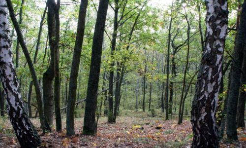 Zdjęcie POLSKA / puszcza kampinoska / Sieraków-Truskaw / jesień
