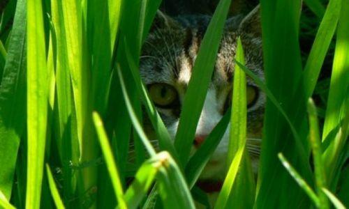 Zdjęcie POLSKA / Śląsk / Bytom / mój kotek