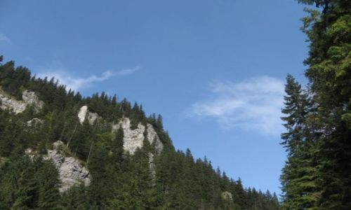 Zdjecie POLSKA / tatry / Zakopane / Góry i lasy