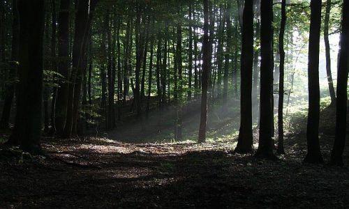 Zdjecie POLSKA / Pomorskie / Trójmiejski Park Krajobrazowy / Promienie 2