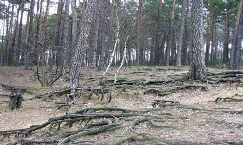 Zdjęcie POLSKA / Wielkopolska / Kuźnica Zbąska / Las