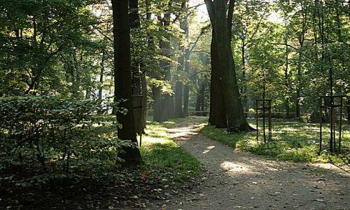 Zdjęcie POLSKA / Mazowsze / Warszawa - Łazienki Królewskie / Jesiennie