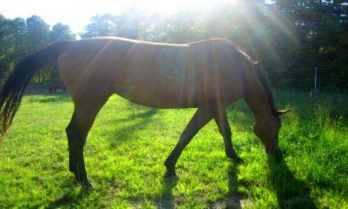 Zdjecie POLSKA / Kaszuby / Elżbietowo-mała wioska / Promienny koń