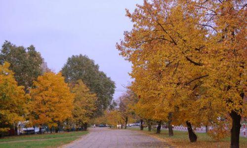 Zdjęcie POLSKA / mazowiecki / warszawa / złota jesień