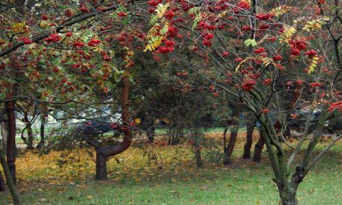 Zdjecie POLSKA / mazowiecki / warszawa / owoce jesieni