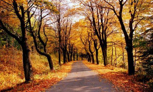 Zdjecie POLSKA / Pogranicze gór Złotych i Bialskich / droga z przejścia granicznego w Lutyni / droga do jesieni