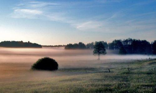 Zdjęcie POLSKA / brak / Okolice Mordów k\ Siedlec / Ranne mgły