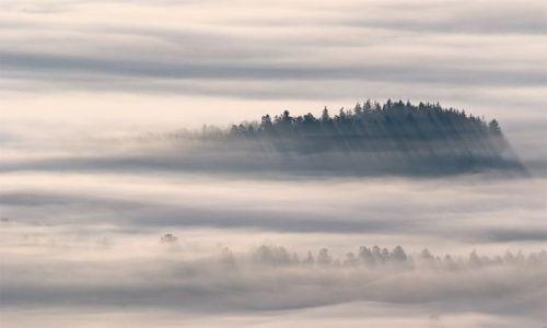 Zdjecie POLSKA / Południe / Góry Stołowe / Wyspa pośród mg