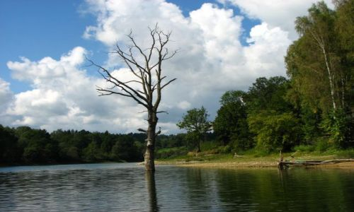Zdjecie POLSKA / Bieszczady / zalew Soliński / drzewo wisielca-Solina