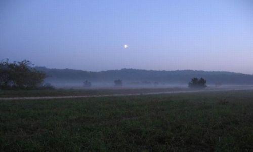 Zdjecie POLSKA / Zachodniopomorskie, powiat policki / za gazowią / W tej mgle (jeszcze raz )