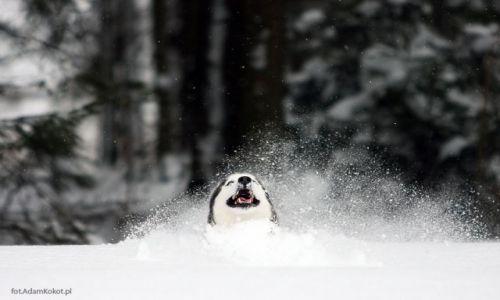 Zdjecie POLSKA / Podhale / Podhale / Snow Monster