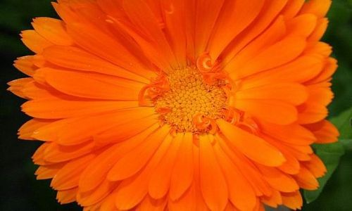 Zdjecie POLSKA / brak / mazowieckie / taki sobie kwiatek