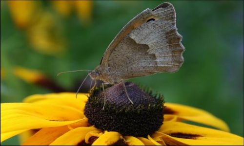 Zdjecie POLSKA / brak / gdzieś w ogrodzie.. / motylek