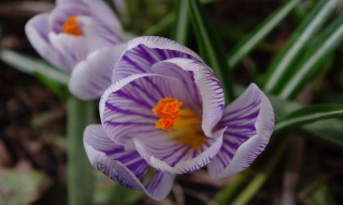 Zdjecie POLSKA / brak / brak / jest wiosna!!!