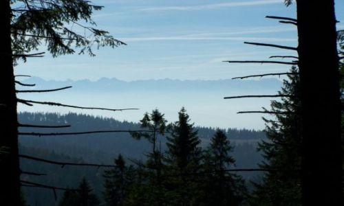 Zdjecie POLSKA / Małopolska / Turbacz / widok na Tatry po drodze na Turbacz