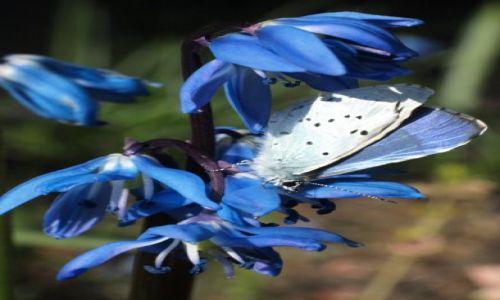 Zdjecie POLSKA / centralna / pod oknem / podróżnik...z kwiatka na kwiatek