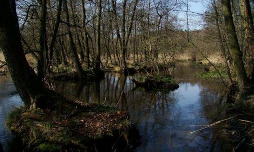 Zdjęcie POLSKA / pomorski / Sepolanski Park Krajobrazowy / rozlewiska