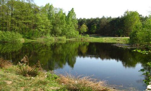 Zdjęcie POLSKA / Mazowsze / Mazowiecki Park Krajobrazowy / Żółwi Staw