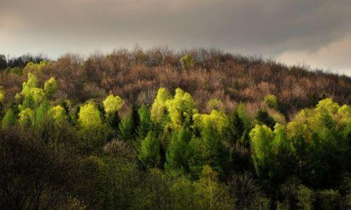 Zdjęcie POLSKA / Bieszczady / Bereżki / Chmurna wiosny twarz