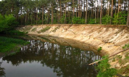 Zdjęcie POLSKA / Mazowsze / Mazowiecki Park Krajobrazowy / Rezerwat Świder