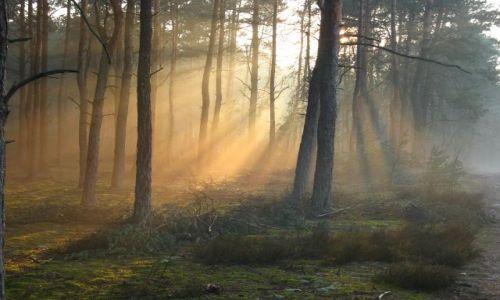 Zdjecie POLSKA / Mazowsze / Mazowiecki Park Krajobrazowy / haze
