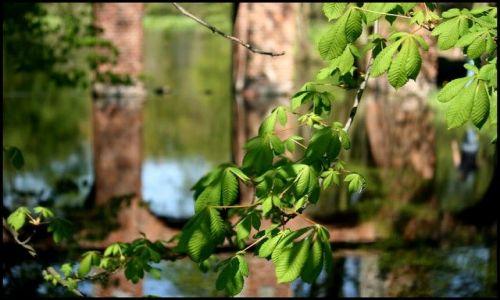 Zdjecie POLSKA / brak / Arkadia / Wiosna w Arkadii