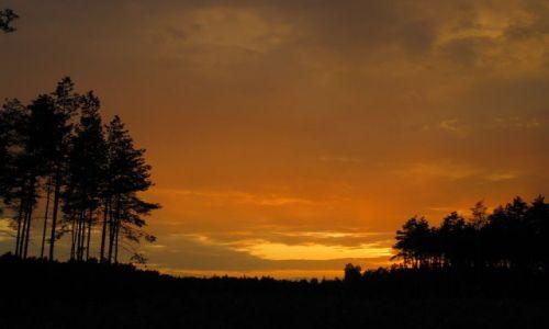 Zdjęcie POLSKA / Mazowsze / Mazowiecki Park Krajobrazowy / zachodni las